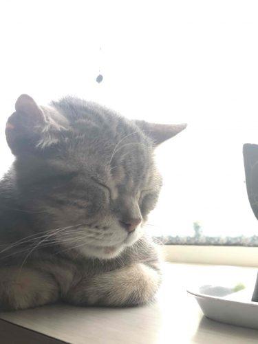 ねこ,猫,ネコ,ギン