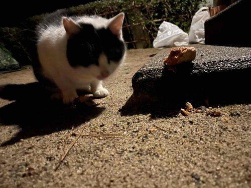 ねこ、猫、ネコ、野良