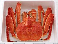 北海道紋別浜茹でたらばがに姿 約1.4kg