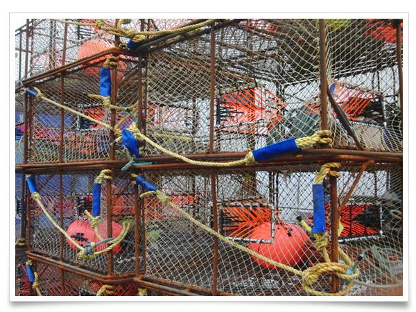 蟹カゴ: エサとなる魚を入れて、沈める。入った蟹は、入り口のトゲトゲにより出れない仕組みになっています。