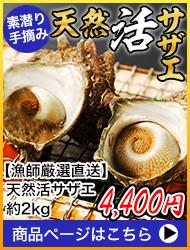 【漁師厳選直送】天然活サザエ 約2kg