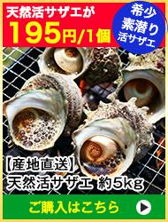 【漁師厳選直送】天然活サザエ 約5kg
